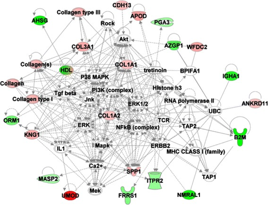 Interactive network of the proteins that are differentially expressed in prostate cancer as compared to BPH